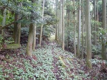 P1110407山道.JPG