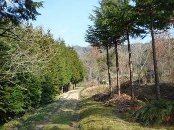 P1150094未舗装林道に変わる.JPG